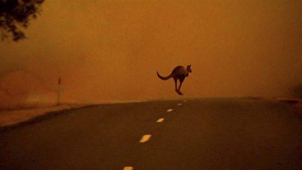 Image from Australia's 2013 heat wave | Australian Broadcasting Corporation via EPA