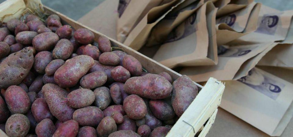 Image from Åsa Sonjasdotter's exhibit exploring biodiversity through the prism of the potato