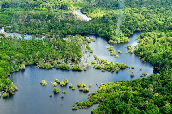 Aerial view of the Amazon Rainforest, near Manaus, the capital Amazonas, Brazil | Photo by Neil Palmer/CIAT for Center for International Forestry Research (CIFOR) | Flickr  (https://www.flickr.com/photos/cifor/6285659976/) | CC BY-NC-ND 2.0