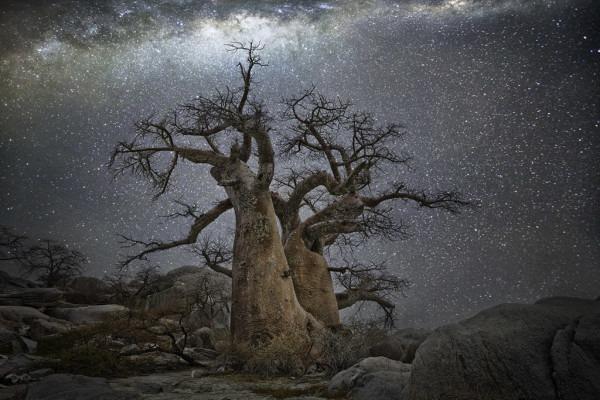 Vela, Baobab in Botswana © Beth Moon