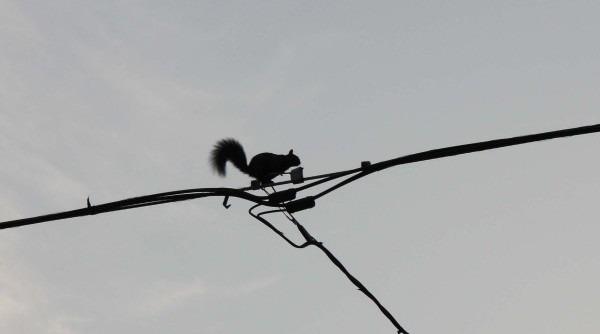 Squirrel in Toronto, Ontario by Ilan Kelman