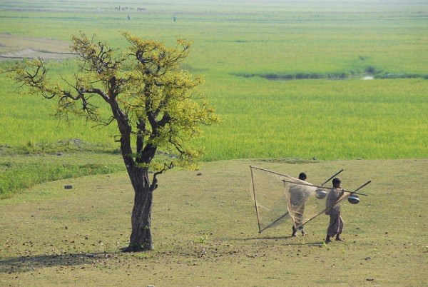 Going fishing in the rice farm, Sunamganj, Bangladesh | Photo by Khaled Sattar, 2007 | WorldFish | Flickr | CC BY-NC-ND 2.0