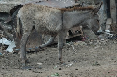 Trapped Burro, Southern India | © M. C. Tobias