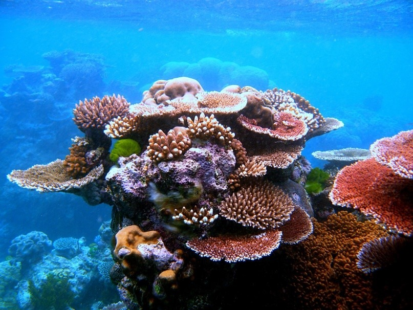 Photo by Toby Hudson | Wikipedia | CC BY-SA 3.0    https://en.wikipedia.org/wiki/File:Coral_Outcrop_Flynn_Reef.jpg
