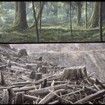 Robert Bateman Carmanah Contrasts | 1989, Acrylic on Canvas, 40x45 © Robert BatemanCurrently on display in Environmental Impact