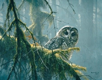 Mossy Branches – Spotted Owl, 1989 Acrylic, 16x20, © Robert Bateman