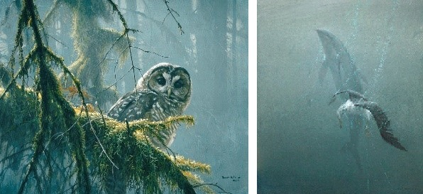 (LEFT) Mossy Branches – Spotted Owl, 1989 Acrylic, 16x20, © Robert Bateman (RIGHT) Driftnet (Pacific White-sided Dolphin & Lysan Albatross), 1993, Acrylic on Canvas, 36x36, © Robert Bateman