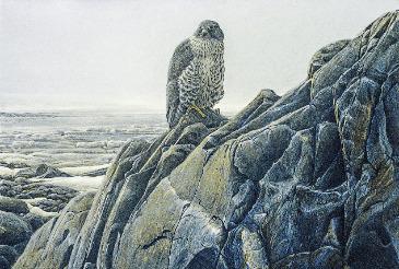Batemanesque: Ron Kingswood, Gyrfalcon, 1982, Acrylic on Masonite, 36x48