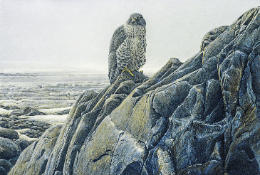 Batemanesque: Ron Kingswood, Gyrfalcon, 1982, Acrylic on Masonite, 36x48