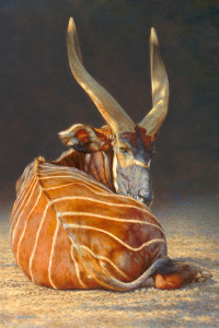 Brian Jarvi Bongo Study, Original Oil 24x36 inches, © Brian Jarvi, Original study for An African Menagerie