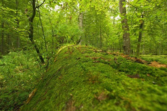 Bialowieza National Park, Poland Photo © M.C.Tobias