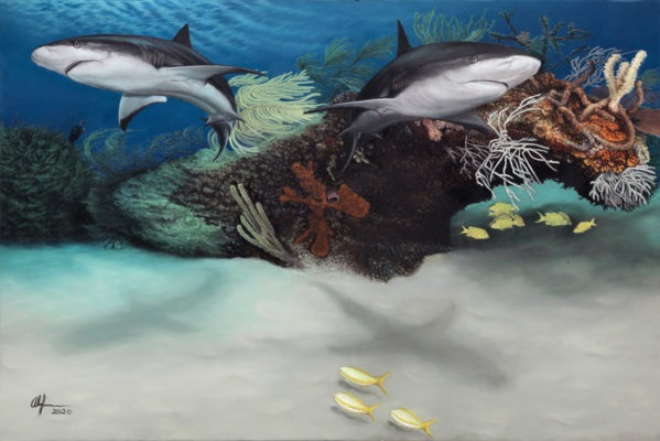 Alan Feldmesser Caribbean Reef Sharks 2012, oil on canvas, 40x60 inchesPrivate collection in Dubai, UAE © Alan FelmesserThis oil painting is a depiction of two Caribbean Reef Sharks swimming on a reef. The paintingdepicts more algae coverage on the reef itself on the left side and less on the right showing the reefs health is at risk and also shows scars on the mouths of the sharks from large fishinghooks used in shark fishing.