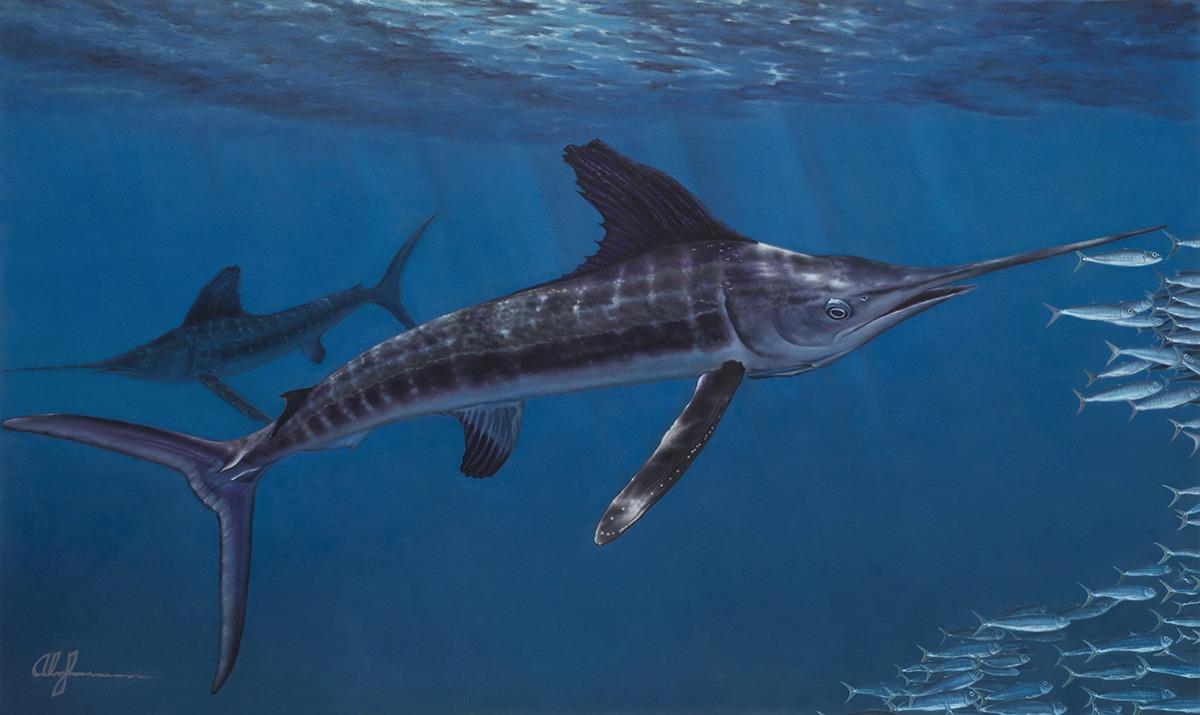 Alan Feldmesser The Hunt 2014, oil on canvas, 36x60 inches © Alan FelmesserTwo White Marlin hunting a school of sardines showing the balance of a predator/prey scenario.