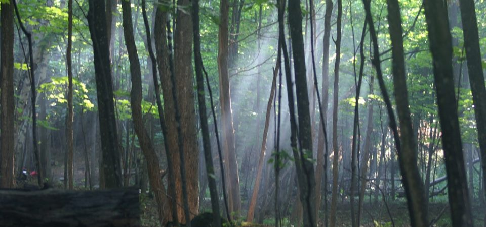 Light in the Forest by Craig | Flickr | CC BY-NC-ND 2.0