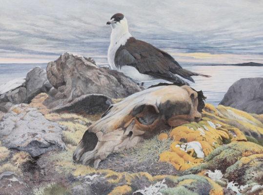 Brent Langley Arctic Twilight Parasitic jaeger and polar bear skull. Oil, 18x24 inches© Brent Langley