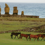 Wild Horses on UNESCO Protected Site, Rapa Nui (Easter Island), Chile, © M.C. Tobias