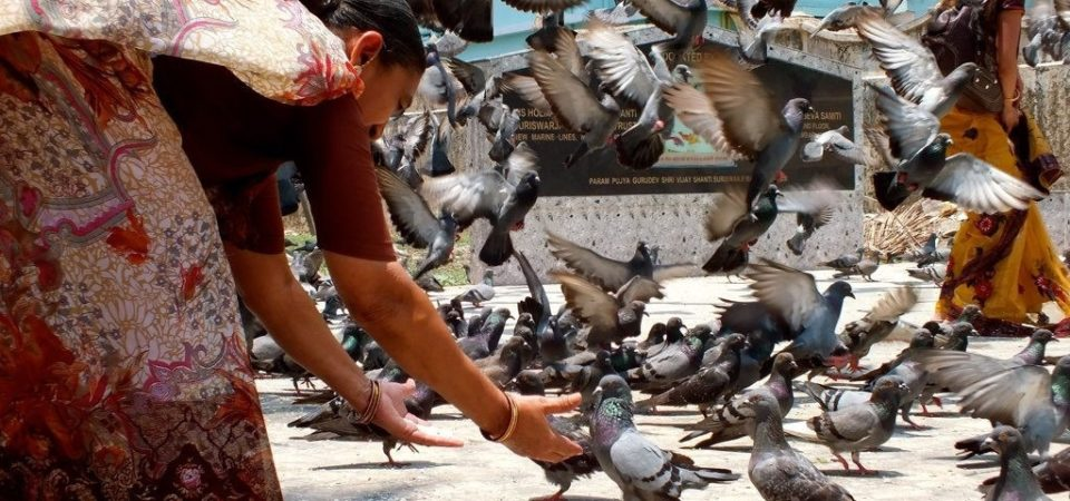 Pigeon-feeding inside the Jain temple by Gaía Passarelli | Flickr | CC BY-NC 2.0