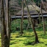 Moss Garden in Kyoto, Japan © J.G. Morrison