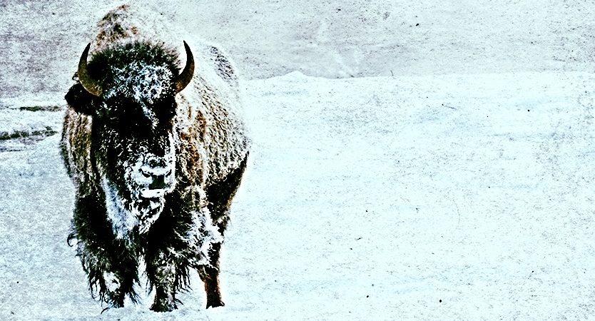 patriarchrun_banner_buffalo075x