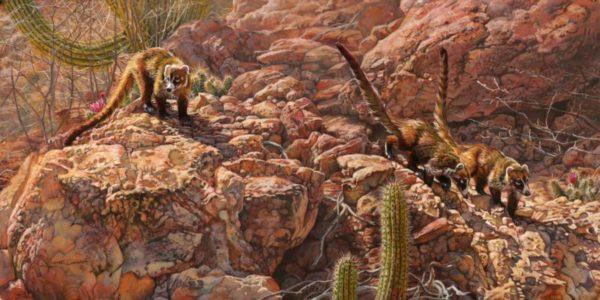 Kim Diment Three Amigos (2013). Coati, Hedgehog Cactus and Organ Pipe Cactus.Acrylic painting on board, 18x36 inches.© Kim Diment