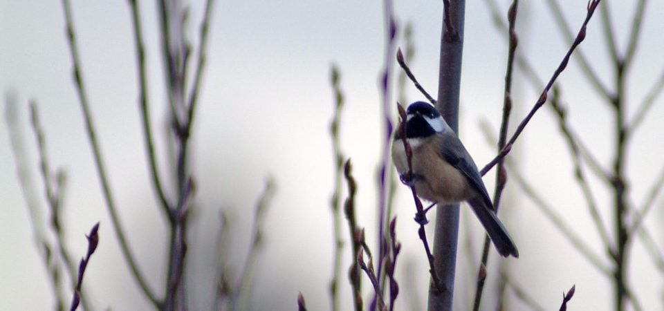 Winter Birding by Matana_and_Jes | Flickr | CC BY-NC-ND 2.0