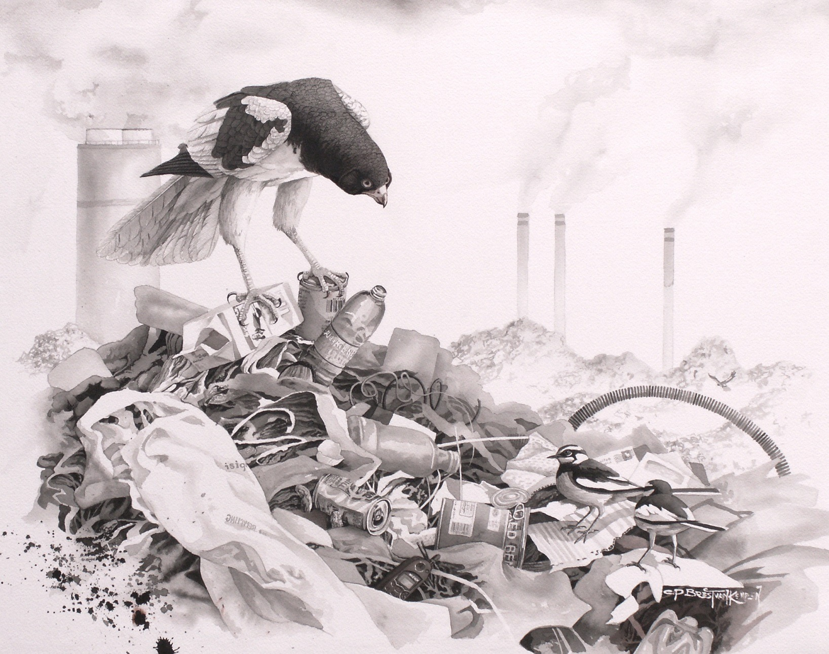 """Carel P. Brest van Kempen Trash Birds–Asian Pied Harrier & African Pied Wagtails (2016) India and sepia ink washes on Arches paper 19""""x24"""" © Carel P. Brest van Kempen"""