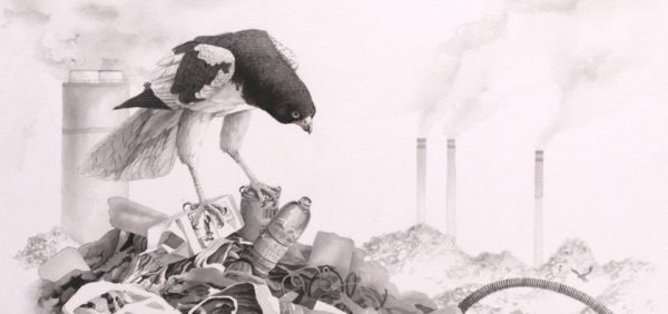 """Carel P. Brest van Kempen Trash Birds–Asian Pied Harrier & African Pied Wagtails (2016) India and sepia ink washes on Arches paper 19""""x24"""" © Carel P. Brest van Kempen 