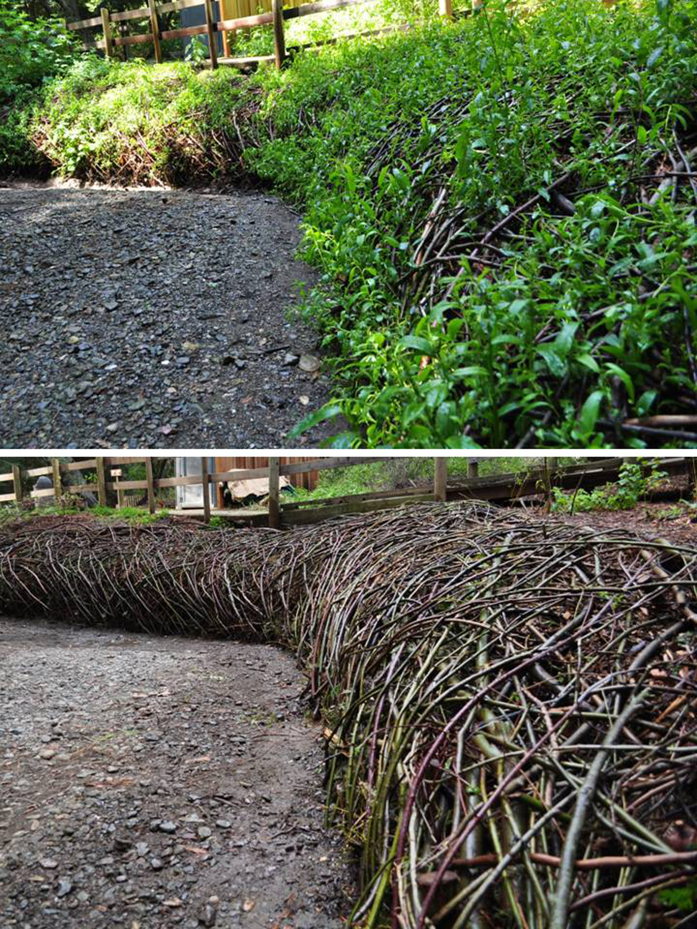 Adobe Creek-Completed, and at 6 Months, Los Altos, CA, 2012. Photographer: Mary A O'Brien