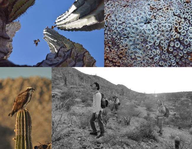 Images clockwise from top left by Maria Johnson, Maria Johnson, Ben Wilder, Ben Johnson
