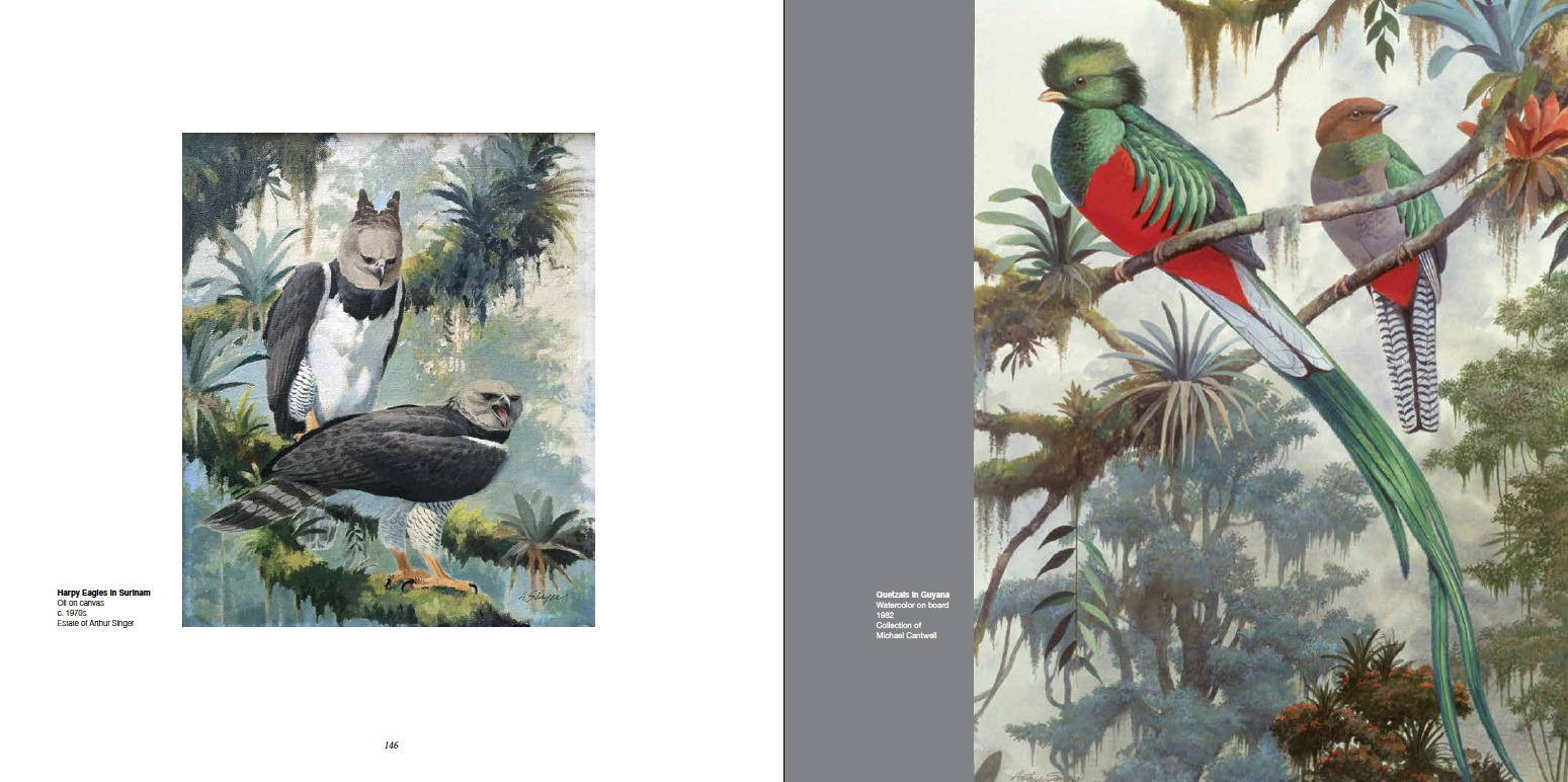Arthur Singer (Left) Harpy Eagles In Suriname, Oil on canvas, c. 1970s, Estate of Arthur Singer; (Right) Quetzals in Guyana, Watercolor on board, 1982, Collection of Michael Cantwell
