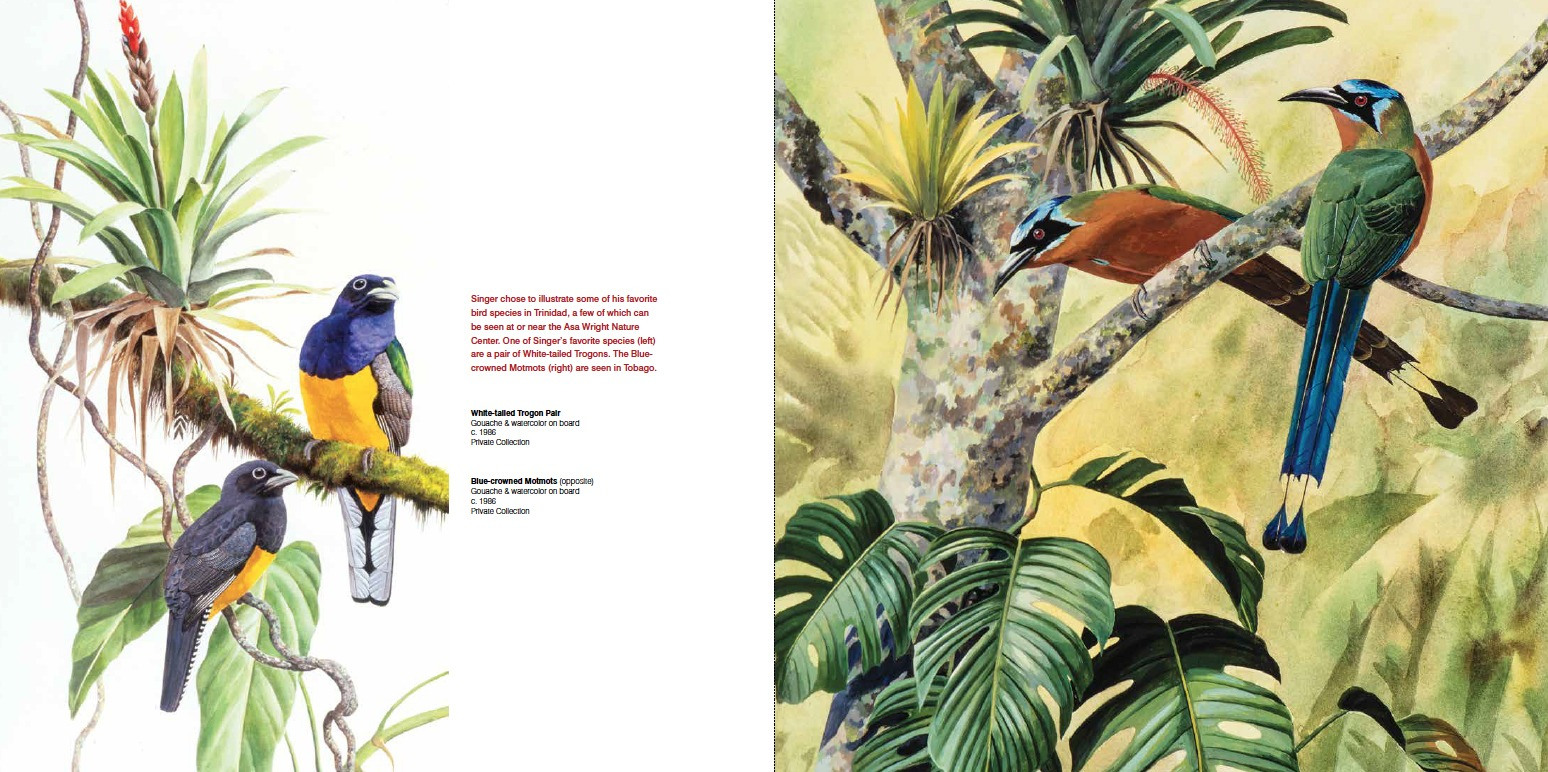 Arthur Singer, Gouache & watercolor on board, c. 1986, Private Collection (Left) White-tailed Trogon Pair (Right) Blue-crowned Motmots