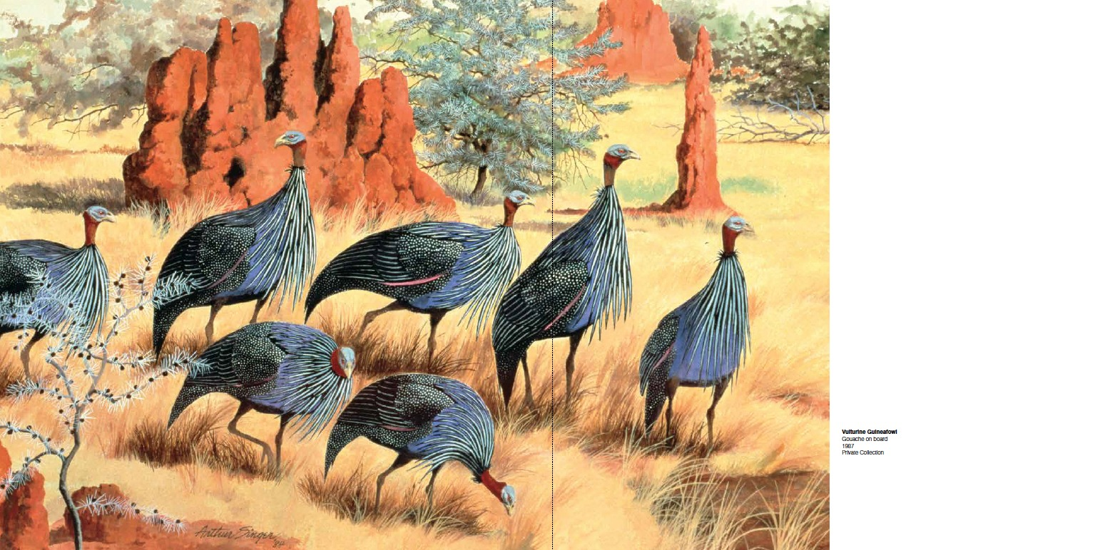 Arthur Singer Vulturine Guineafowl, Gouache on board, 1967, Private Collection