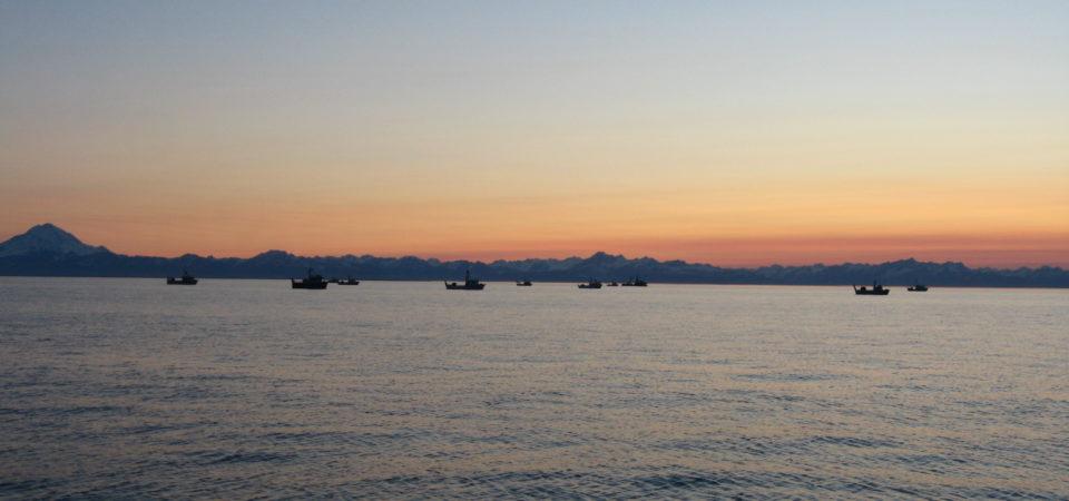 Cook Inlet, Alaska Salmon Drift Fleet by Erika Gavenus