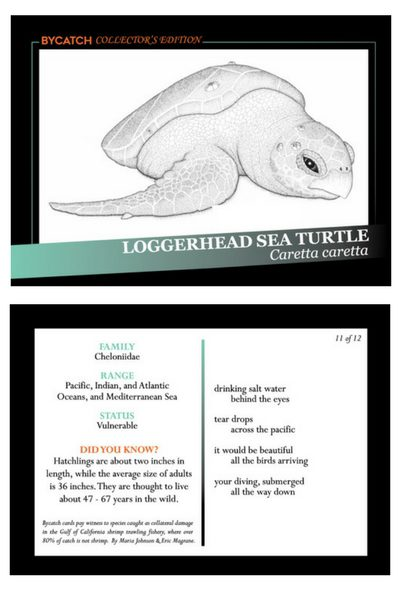 Loggerhead Sea Turtle trading card, front and back, courtesy of Maria Johnson and Eric Magrane