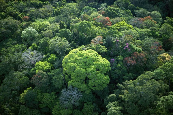 The author has hypothesized that more old-growth forests have been lost than the biosphere can bear.