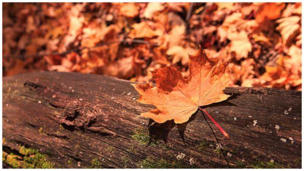 autumn scene by