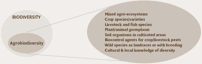 Agrobiodiversity is a set of genetic resources in food and agriculture. FAO
