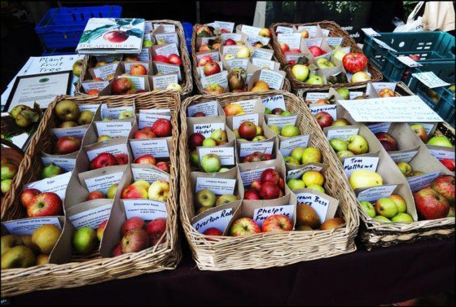 Heirloom apples, Stroud Farmers Market, Gloucestershire, England. Barry W******, CC BY