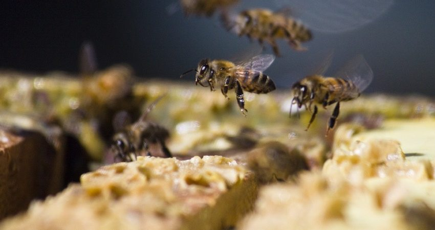 Busy Bees by Sharon Sperry | Flickr | CC BY-NC-ND 2.0