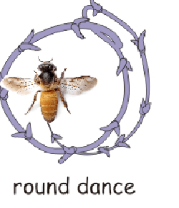 RoundDance