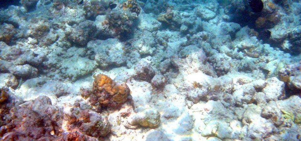 Moofushi_bleached_corals