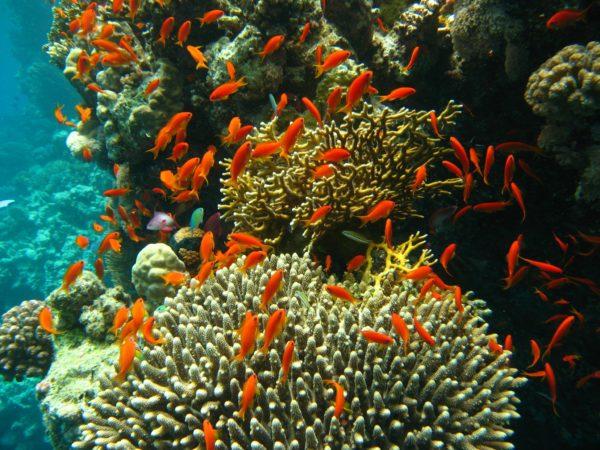 Port_Ghalib_march_2006-0107