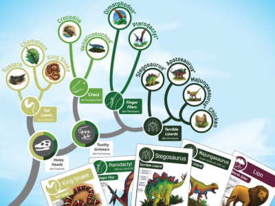 Go Extinct! uses color, icons, text, and illustration to depict the non-linear relationships on the evolutionary tree board.