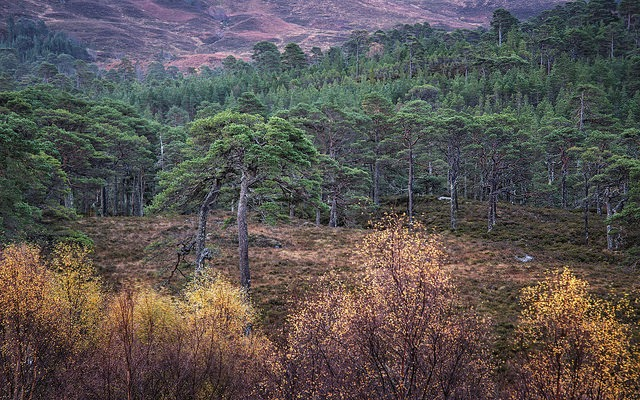 Favoured Trees | Flickr