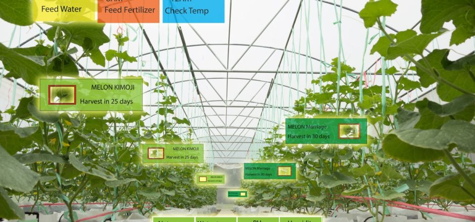 Smart agriculture |  Photo Credit