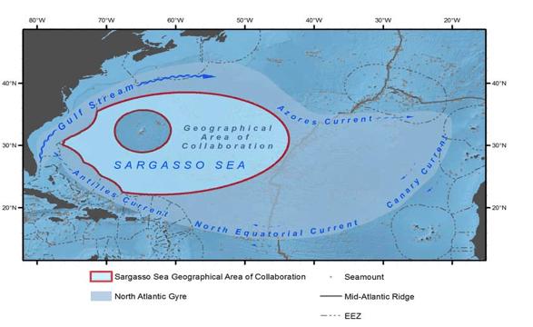 Credit: Marine Geospatial Ecology Lab, Duke University | Sargoasso Sea Commission