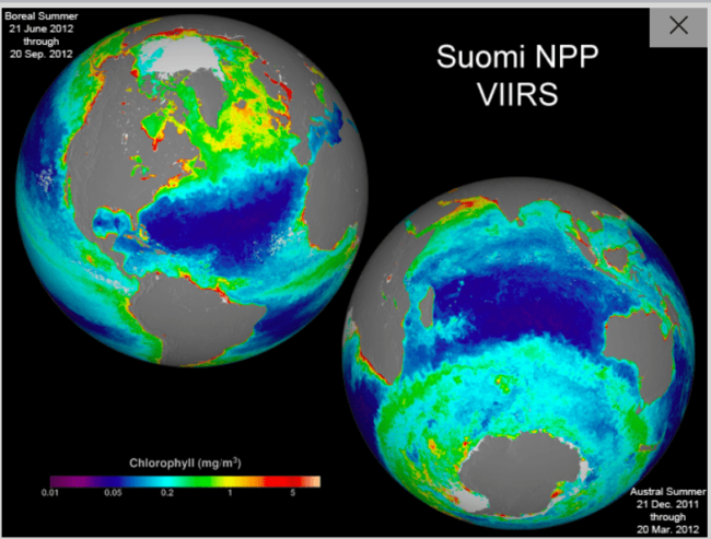 Summer chlorophyll concentration in the northern hemisphere and the southern hemisphere, 2012. Image credit: NASA/SuomiNPP/NormanKuring