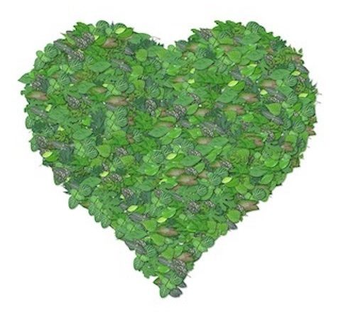 Heart made of leaves.
