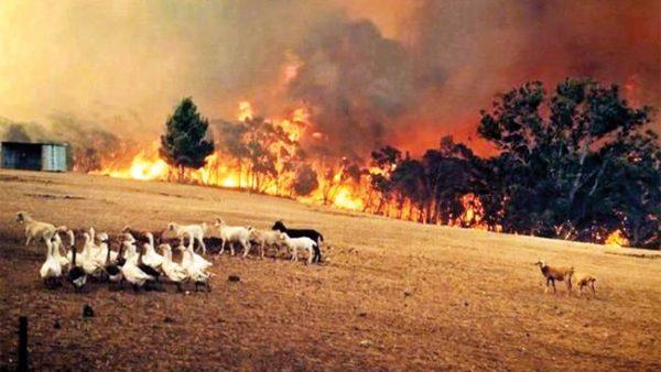 Mid North Coast NSW | Image courtesy of author.