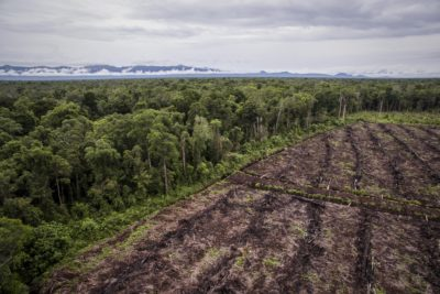 Illegal forest conversion for palm oil plantation